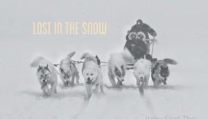 sled dog greenland