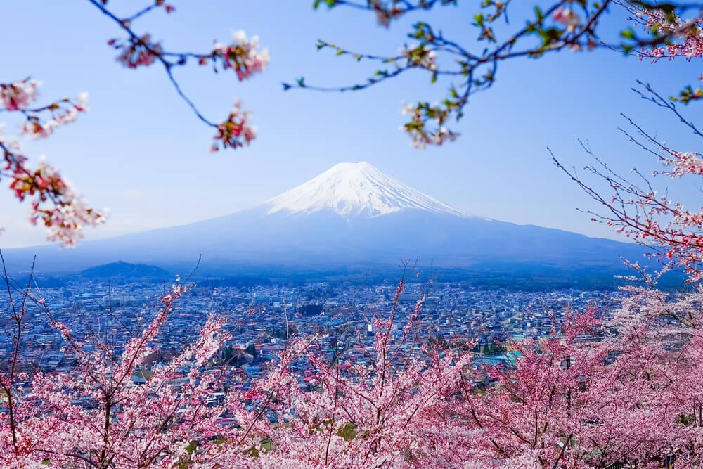 Mt. Fuji With Cherry Blossom (Sakura )in Spring, Fujiyoshida, Japan