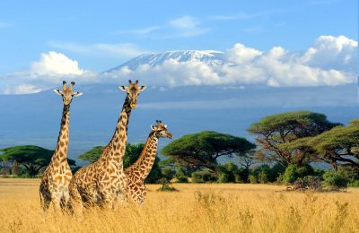 Amboseli National Park South Africa